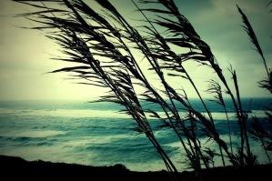 Canne_al_vento
